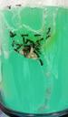 Ants015