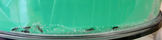 Ants019