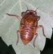 Cicada001