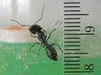 Ants006