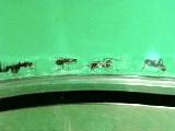 Ants022